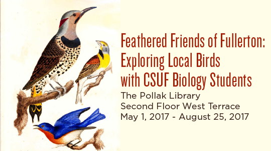 Details for the Feathered Friends exhibit
