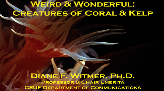 Weird and Wonderful: Creatures of Coral and Kelp